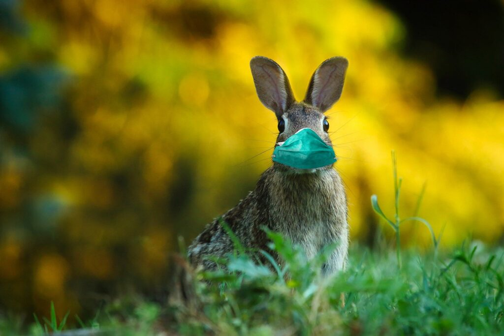 Foto di un coniglio con la mascherina, per indicare che siamo sia in pandemia che nel periodo di pasqua.